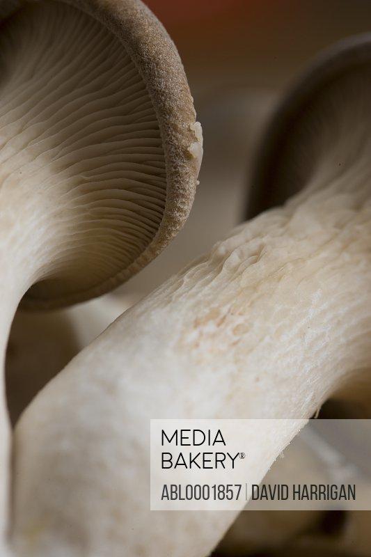 Extreme close up of eryngi mushrooms