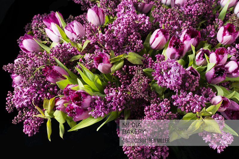 Close up of Bouquet of Pink Tulips and Lilac Flowers