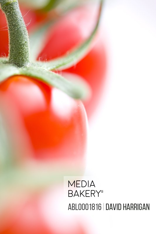 Extreme close up of small plum tomatoes on the vine