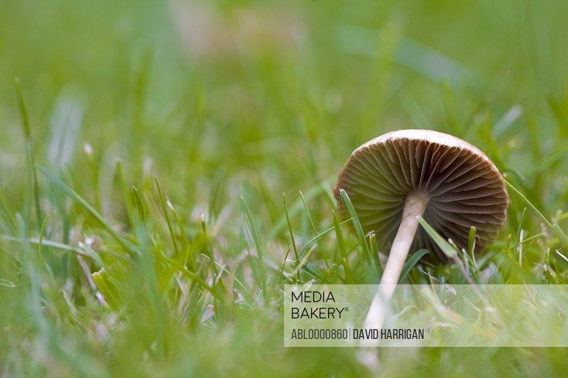 Close up of a mushroom - Fungus