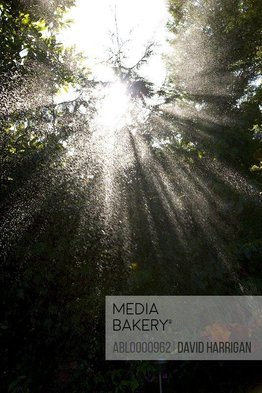 Sun rays and rain spraying over trees - low angle