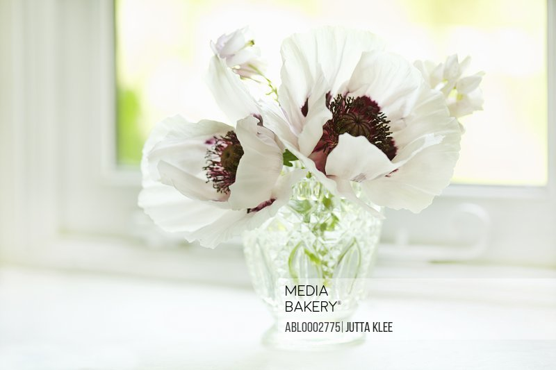 White Poppies in Crystal Vase