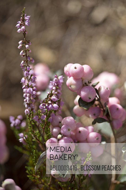 Pink Berries and Flower Blossom