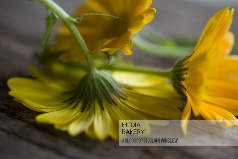 Yellow marigold flowers on wood upside down