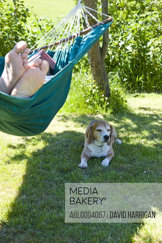 Man Lying on Hammock in Garden with Dog