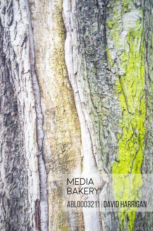 Tree Bark with Green Moss, Full Frame