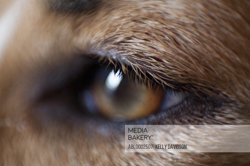 Extreme Close Up of Dog's Eye