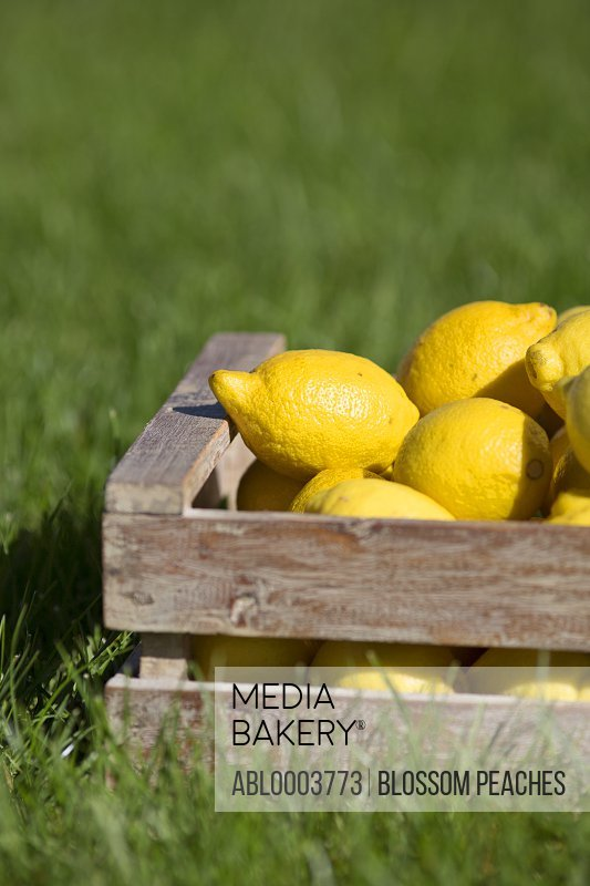 Crate of Lemons on Grass