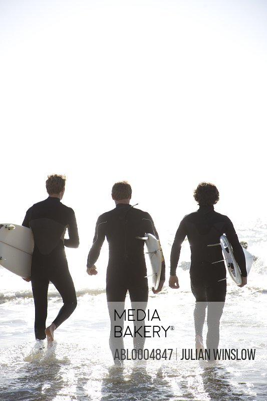 Back view of  three surfers walking in the sea holding surfboards