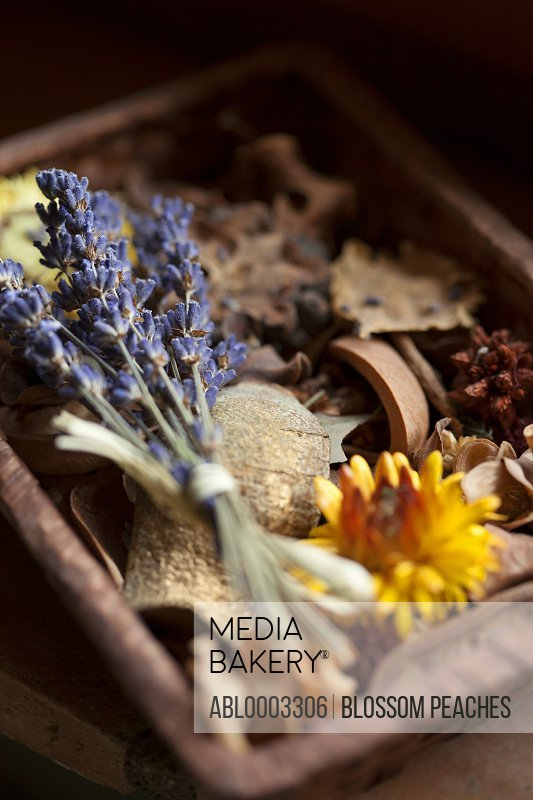 Wood Tray Filled with Dried Flowers and other Objects, Close-up View