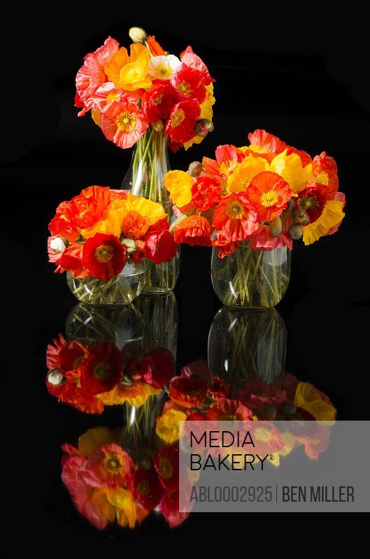 Orange and Yellow Poppies in Glass Vases