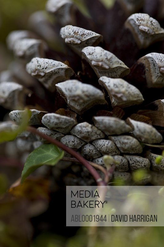 Extreme close up of a pine cone