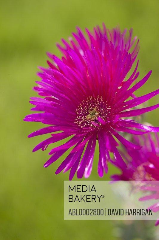 Bright Pink Flower Blossom