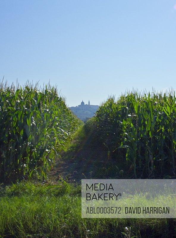 View of the Basilica di Loreto from Corn Field, Marche, Italy
