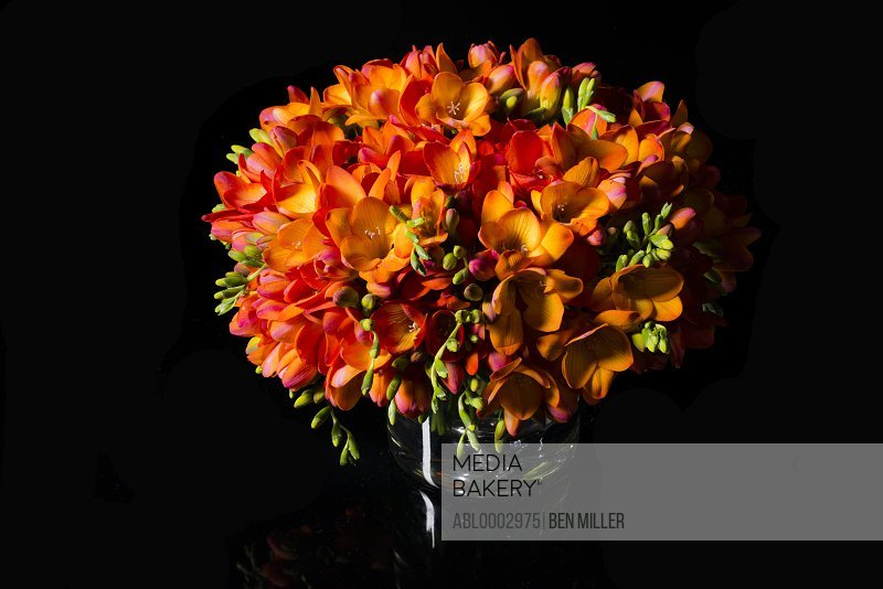 Bouquet of Orange Freesia in a Vase