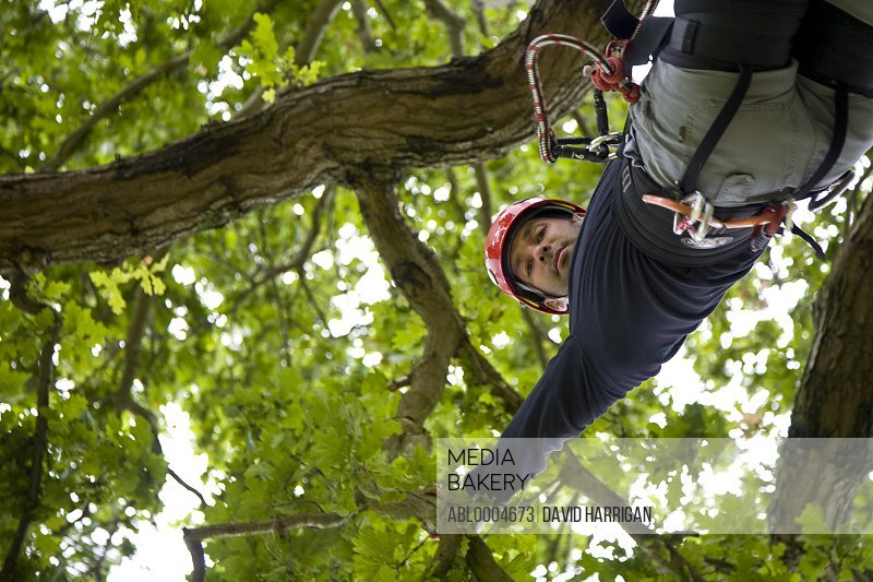 Portrait of a climber hanging from tree