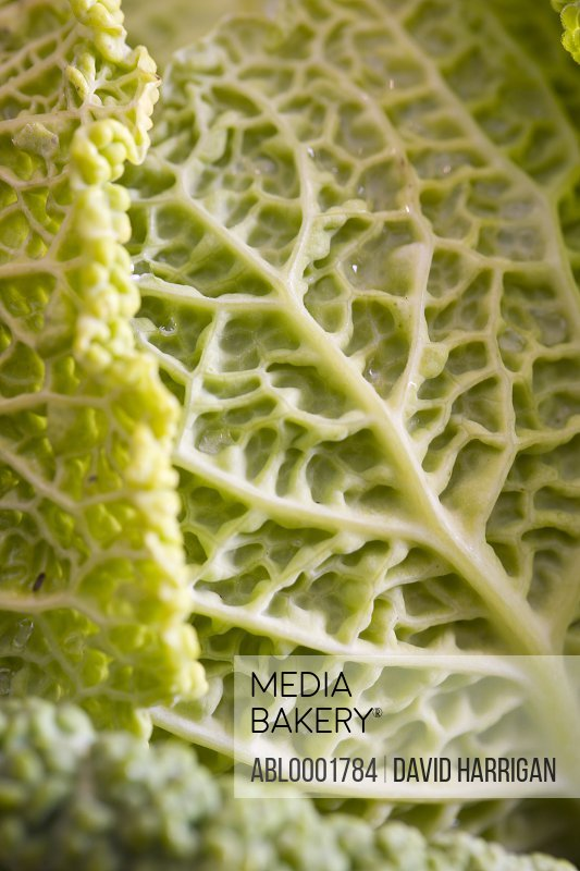 Extreme close up of a cabbage leaf