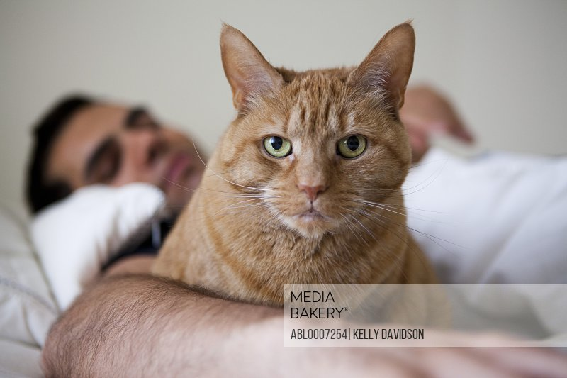 Ginger Cat in Bed with Man