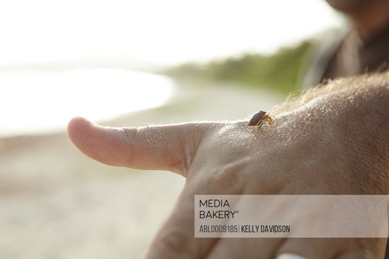 Hand Holding Baby Hermit Crab, Close-up view