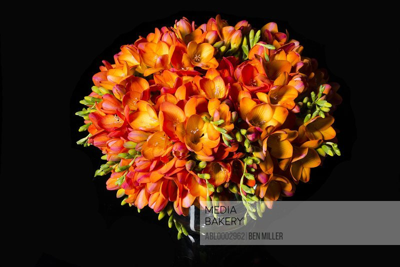 Close up of Orange Freesias Bouquet
