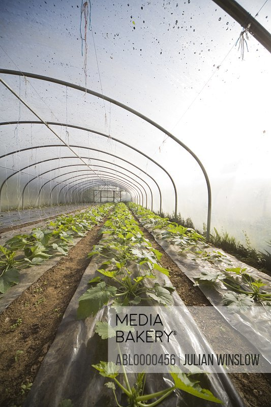 Plants seedlings in greenhouse