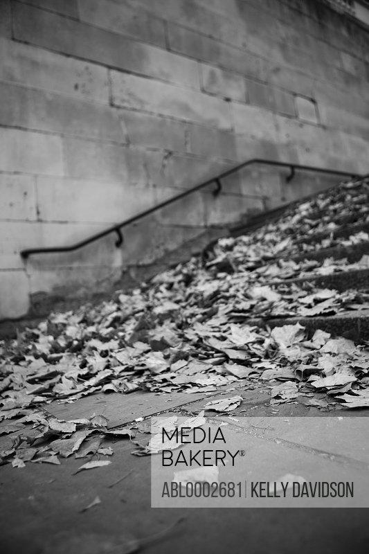 Autumn Leaves on Steps