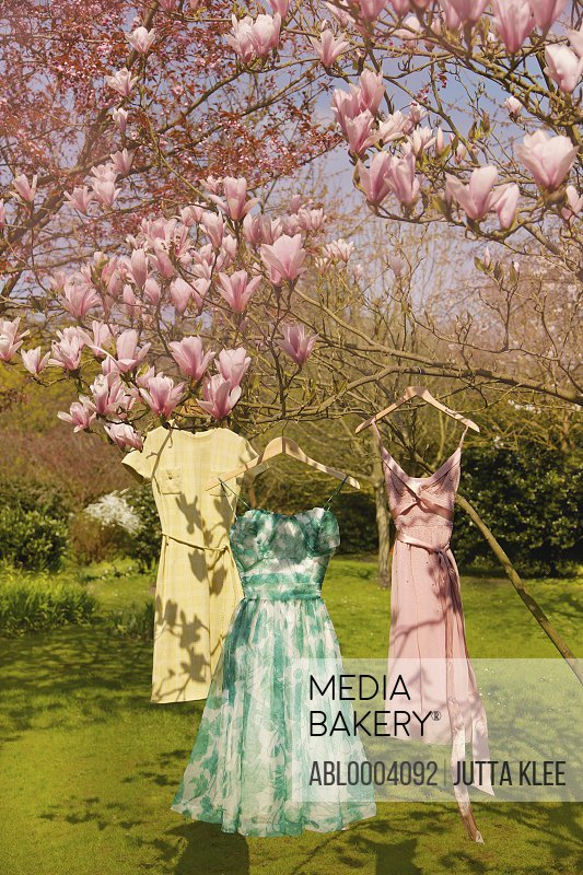 Dresses Hanging from Magnolia Tree