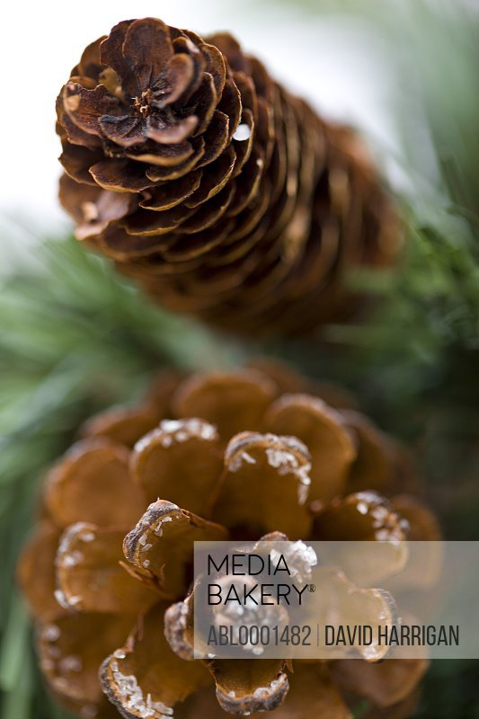 Close up of decorative pine cones