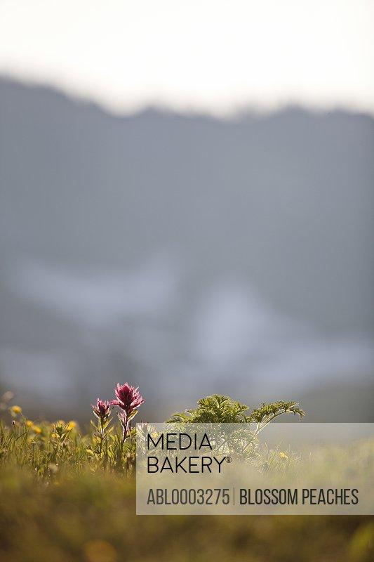Flower in Meadow