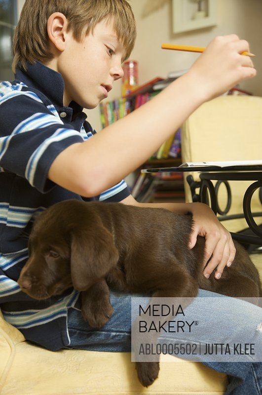 Boy doing his homework with a chocolate labrador puppy on his lap