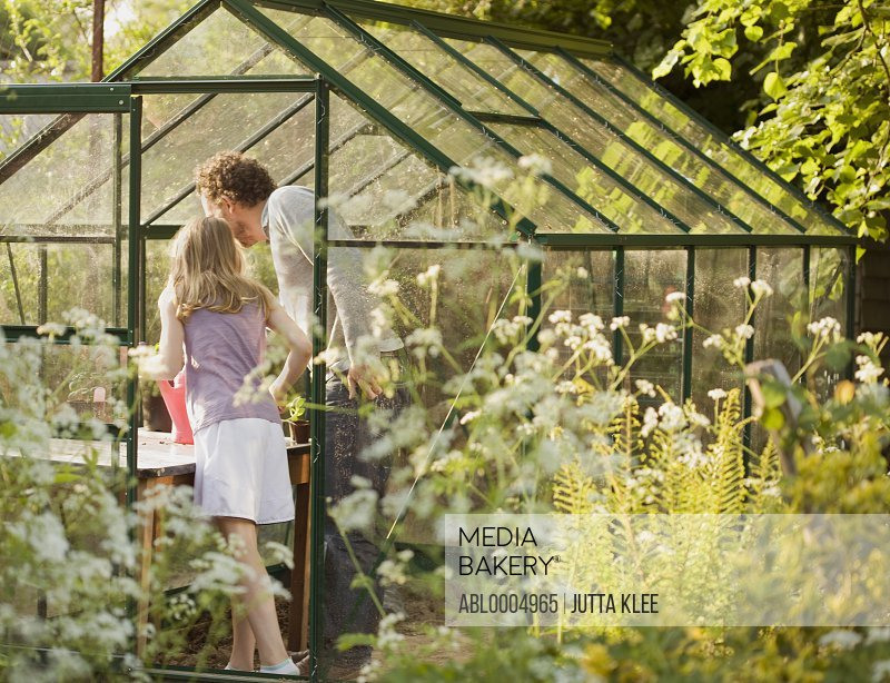 Back view of man and young girl tending plants in a greenhouse
