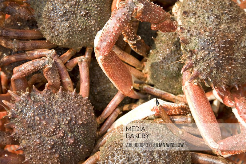 Extreme close up of crabs and crab claws