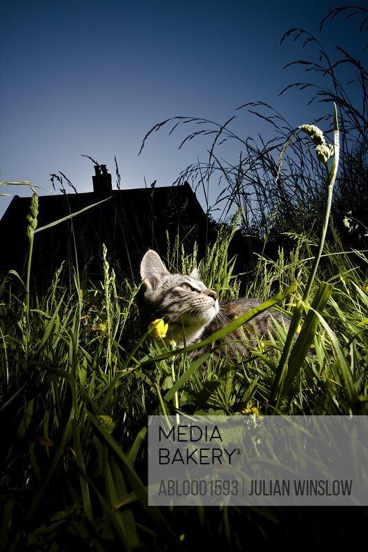 Cat sitting amongst long grass