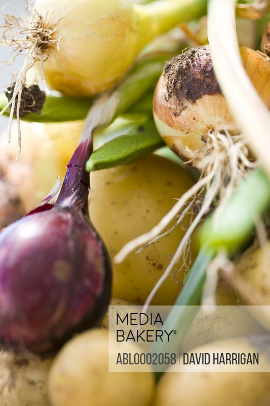 Extreme close up of Onions, Potatoes and Runner Beans