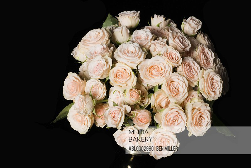 Close up of Bouquet of Pink Roses