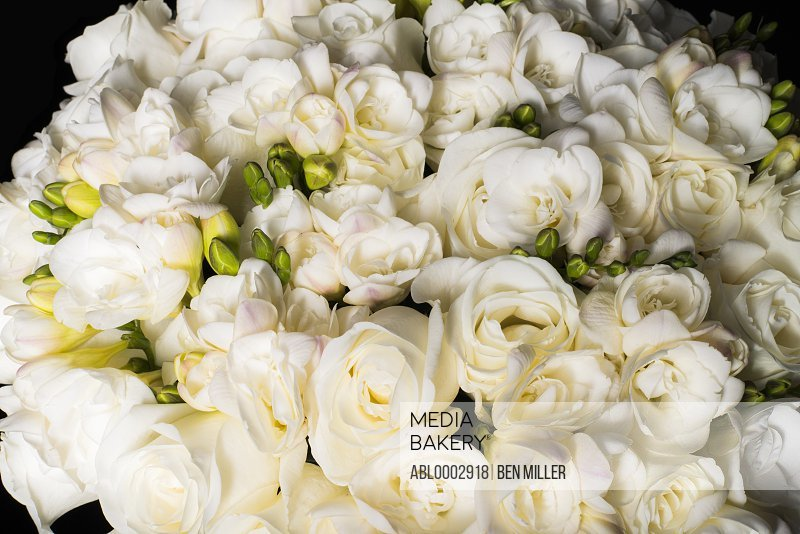 Close up of White Roses and Freesias Flowers