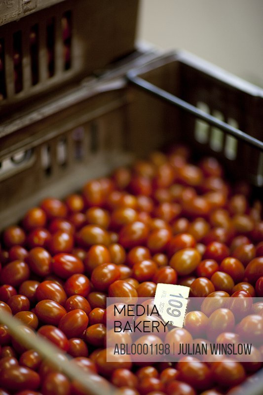 Close up of a plastic crate filled with mini plum tomatoes