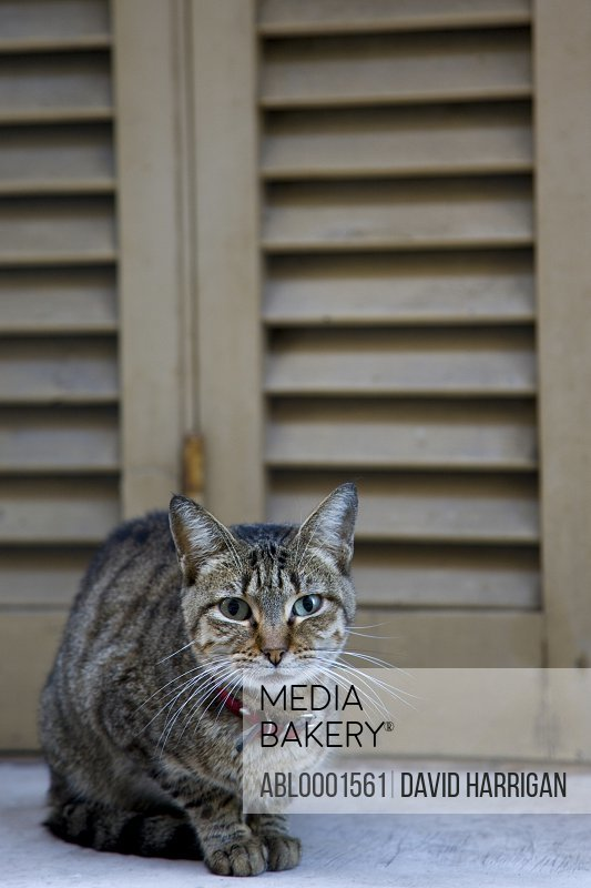 Cat sitting in front of a wooden shutter