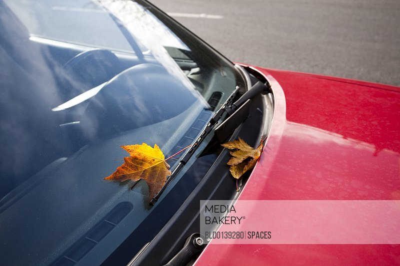 Leaf on Windshield of Red Car