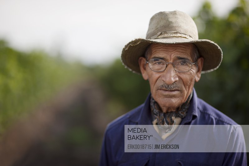 Senior Hispanic man in an orchard.