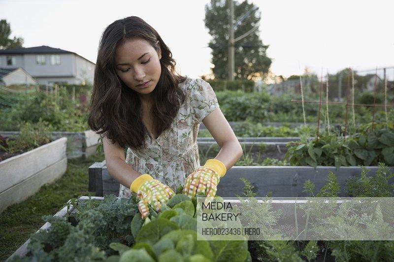 Teenage girl tending to plants in vegetable garden