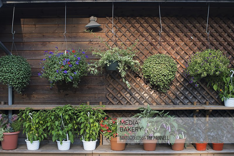 A row of plants against a wall in the potting shed at an organic farm.