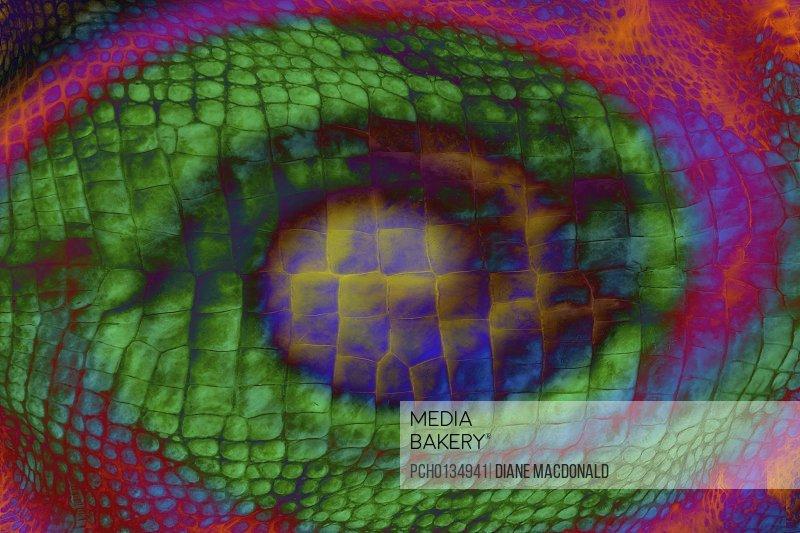 Digital enhancement of alligator skin