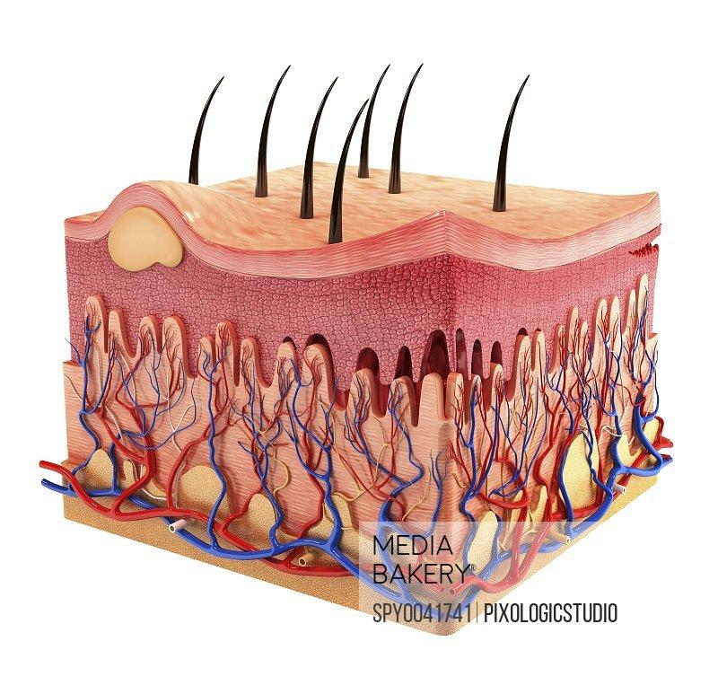 Human skin artwork